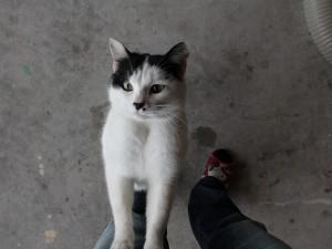 また別の居候猫