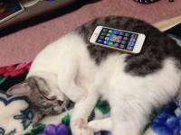 iPhoneかまうと楽しいニャ~